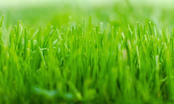 Lawn Service in Tampa FL Lawn Care in Tampa FL Lawn Mowing in Tampa FL Lawn Professionals in Tampa FL