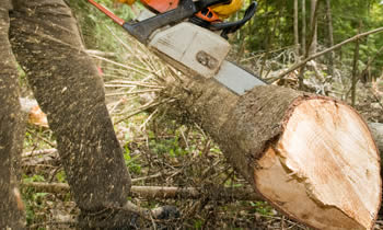 Tree Service in Tampa FL Tree Service Estimates in Tampa FL Tree Service Quotes in Tampa FL Tree Service Professionals in Tampa FL